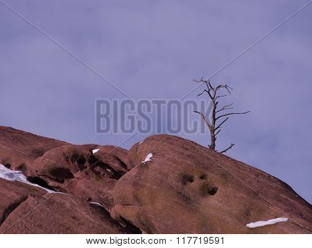 Solitary Tree And Red Rocks