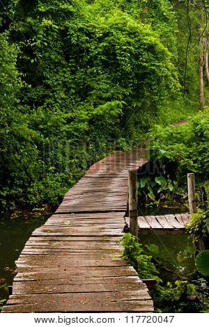Wooden Bridge For Walk In The Rain Forest