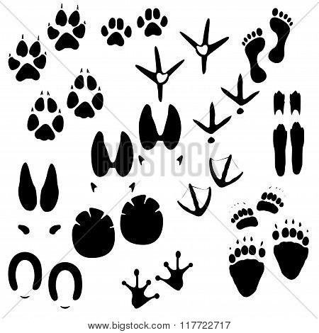 Collection of animals, birds and man trace