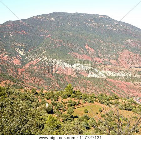 The    Dades Valley In Atlas Moroco Africa Ground Tree  And Nobody