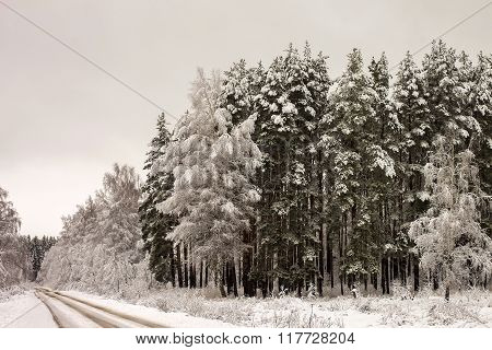 Russia. Winter Landscape. Wood And Road