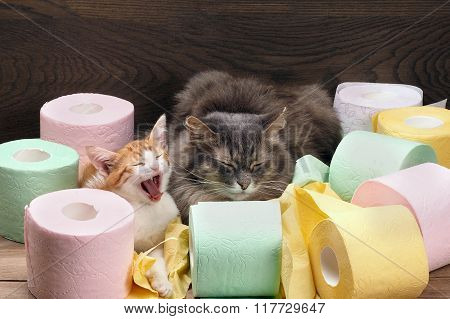 Cats and colored toilet paper.