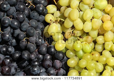 Raw White And Black Grapes