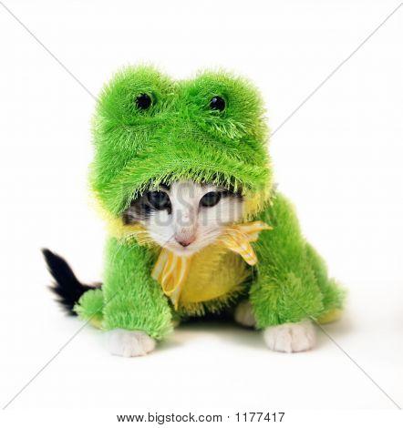 Kitten In Frog Suit