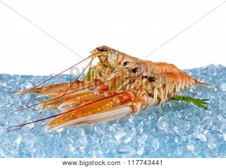 Fresh lobsters isolated on white background