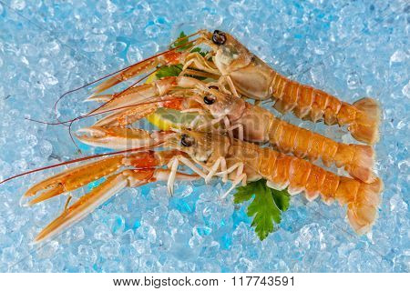 Fresh lobsters isolated on ice drift