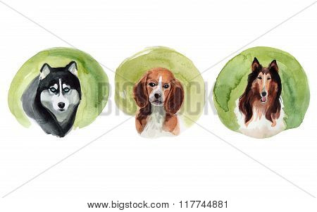 Set of dogs drawn by watercolor.