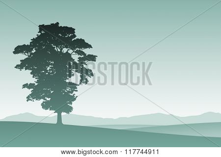 A Lone Tree in Silhouette with Meadow Landscape