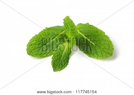Mint on a white background