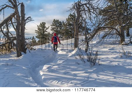lonely hiker on trial at Colorado foothills, winter morning with wind blowing snow