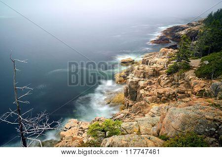 Rocky Shoreline and Trees