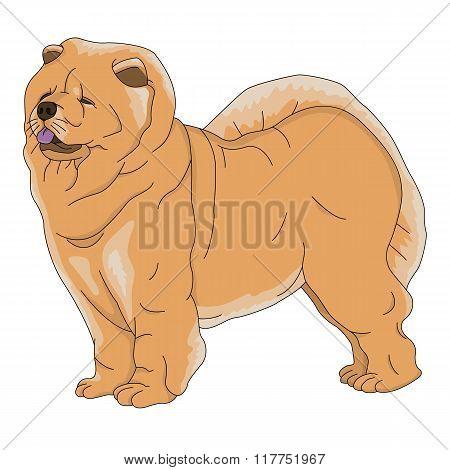 dog chow chow red faithful