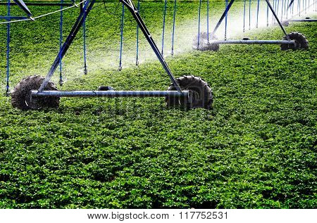 Farming sprinkler watering field of green crops