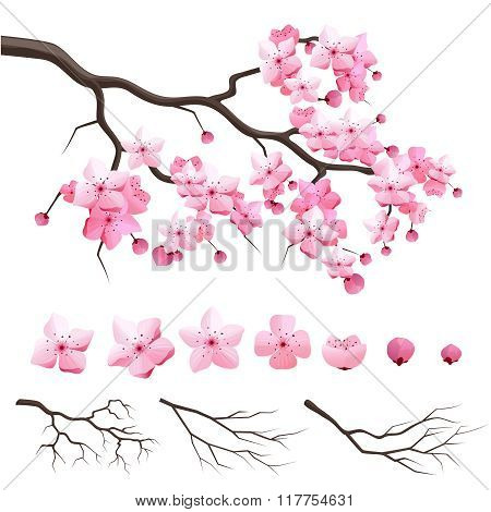 Japan sakura cherry branch with blooming flowers