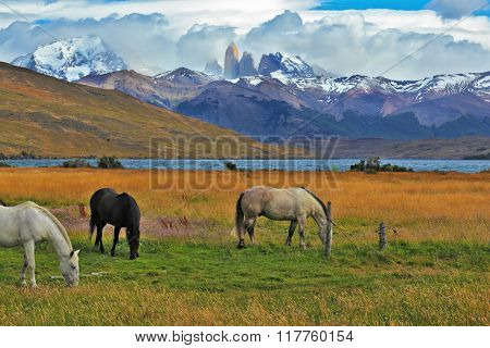 Impressive landscape in the national park Torres del Paine, Chile. Lake in the mountains. On the shore of Patagonian grazing horses