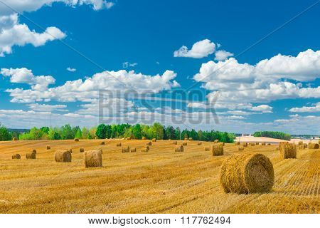Stacks Of Hay On The Treated The Field Beautiful Landscape