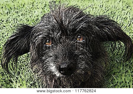 Ilustration Of Mixed Breed Dog In The Lawn