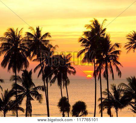 Evening Scene Palm Paradise