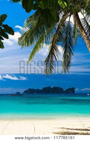 Jungle and Sea Island Lagoon