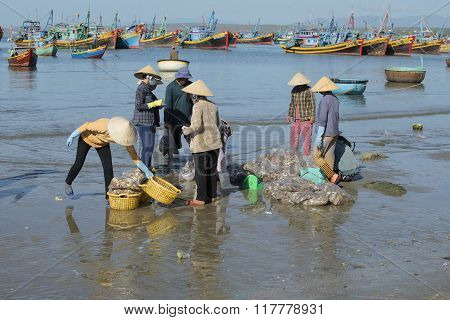 Sorting and delivery of the catch by fishermen in the Fishing harbour of Mui Ne. Vietnam