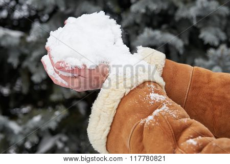 Female hands full of snow, winter season concept. Fir tree background.