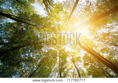 Sunshine over the trees in forest