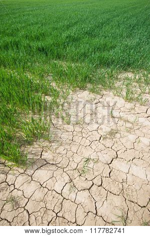 Cracked dry soil on agricultural field