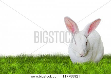 Bunny Easter on right side on grass on white background
