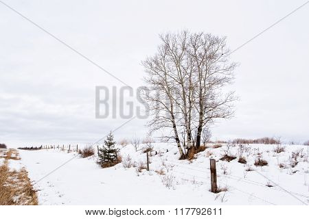 An agricultural winter landscape