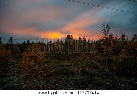 Sunset in the northen forest in summer time
