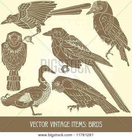 variedade de pássaros vintage