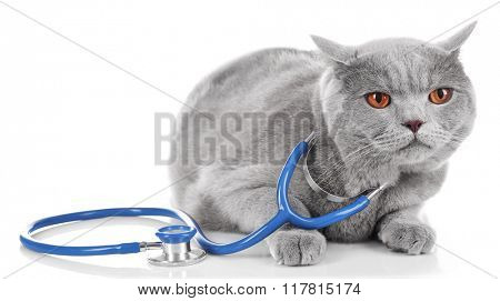Short-hair grey cat with stethoscope isolated on white background