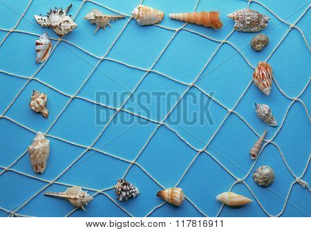 Frame shaped seashells on turquoise background