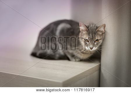 Cat lying on wooden shelf at home