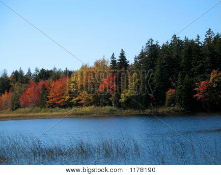 Autumn Pond - Backwoods Maine