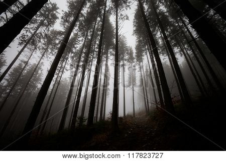 Beautiful foggy Beskidy mountains landscape