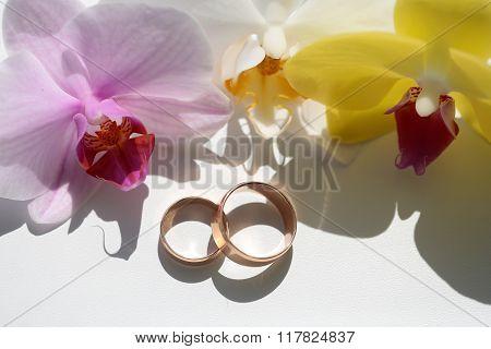Pair Of Elegant Wedding Rings