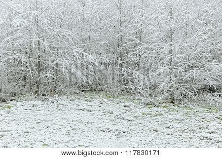 Trees and the whole area covered with hoarfrost rime, beautiful winter scene