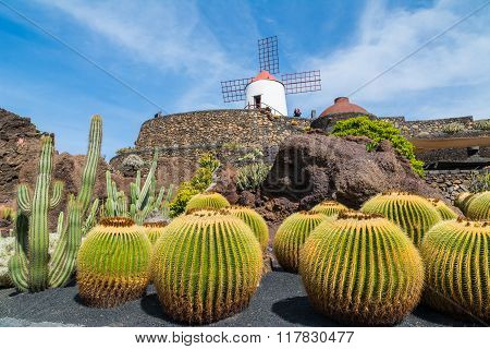 View Of Cactus Garden In Guatiza Village, Lanzarote, Canary Islands,spain