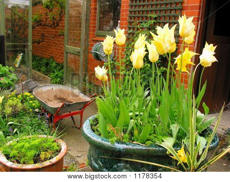 Courtyard Garden Scene
