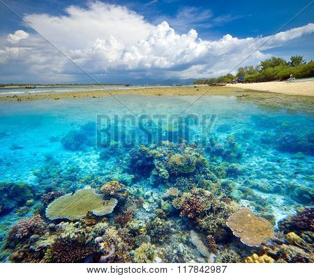 Beautiful Coral Reef.