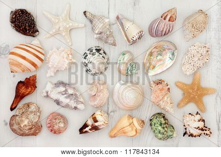 Large seashell collection on a distressed white wooden background.