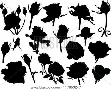 illustration with black roses sketches isolated on white background