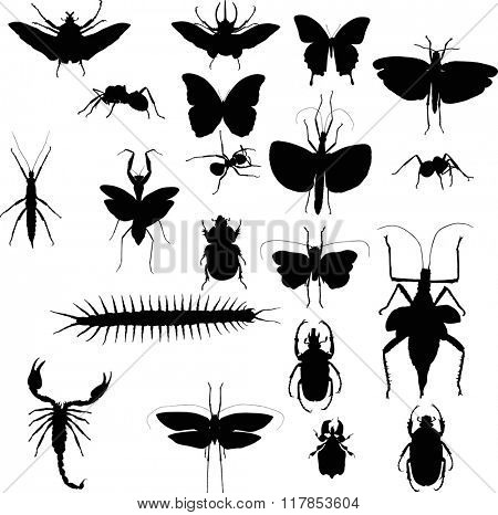 illustration with insect collection isolated on white background