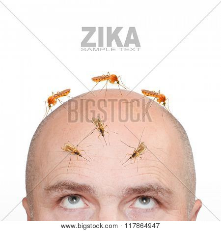 Hairless man with sucking mosquitos on his head. Zika infection control concept.