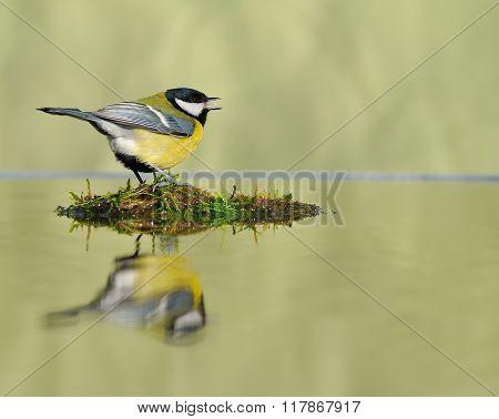 Big Tit Singing While Sitting On Wet Plot Of Land