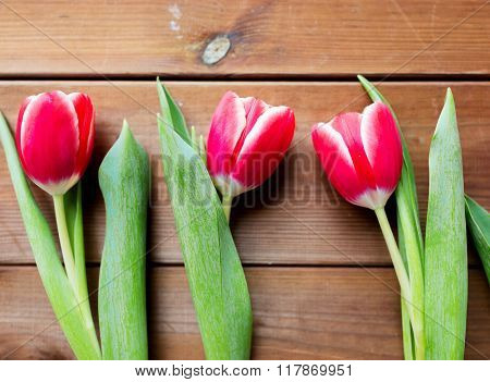 flora, gardening and plant concept - close up of red tulip flowers on wooden table