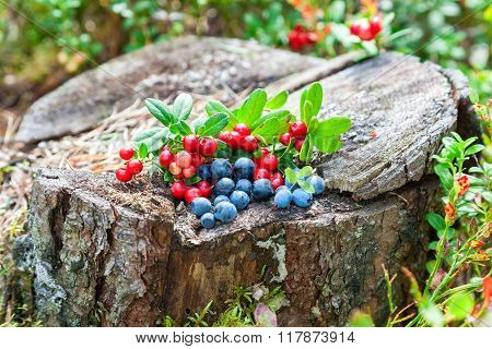Wild Berries On An Old Stump At The Forest