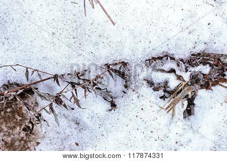 Dry Autumn Grass Under Snow