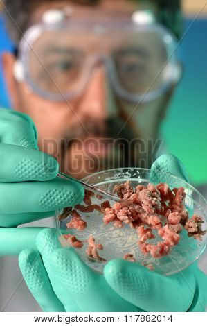 Microbiologist performing test on meat in a petri dish